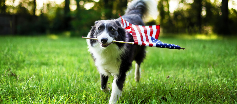 july-4th.adobestock_84977202_2017-01-29-15-44-20.jpeg